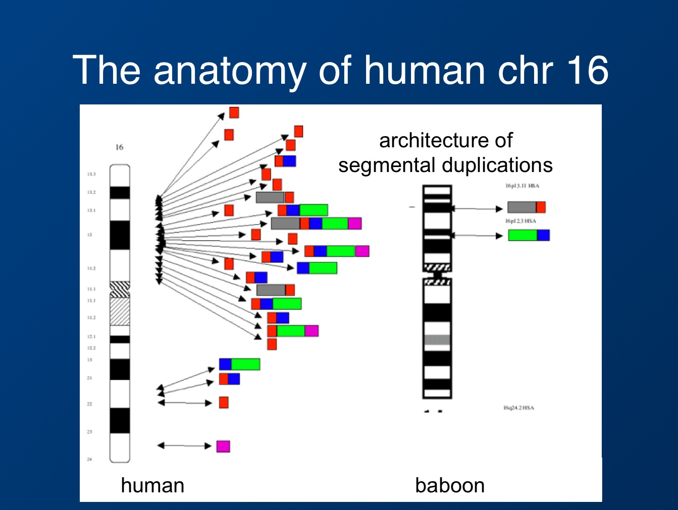 How human evolution has shaped epilepsy genes | Beyond the Ion Channel