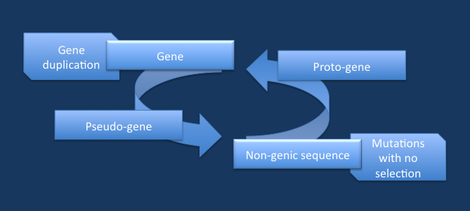 Gene birth in yeast and human | Beyond the Ion Channel