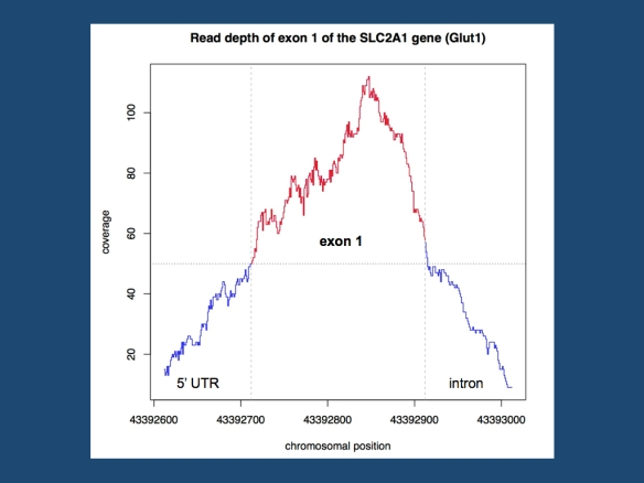 Coverage of the first exon of the SLC2A1 gene (Glut1) in a random EuroEPINOMICS exome. The first exome of this gene is well covered with a read depth of 50 and more at each base pair of the exon.