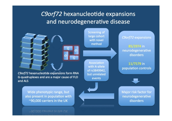 Study by Beck and colleagues. C9orf72 expansions are thought to produce so-called RNA G-quadruplexes, stable secondary structures that may interfere with normal cellular functions. The authors developed a novel method for rapid screening for these expansions and investigated both a group of patients with various neurodegenerative disorders and population controls. They find these expansions to be present in a more diverse group of patients than previously anticipated. Also, up to 0.2% of the population are carriers of these massive expansions.