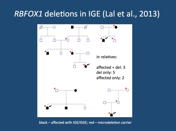 In 4/5 cases, inheritance could be traced in the family. In 3/4 families, additional family members were affected by IGE. Segregation was incomplete as previously observed in other microdeletions, which is in line with the behavior of rare genetic variants in families.