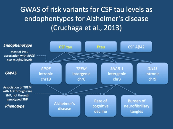 The three different level of endophenotype studies, including the endophenotype, the genetic risk factors and the disease phenotype. A thorough study into the relationship of the individual elements may produce a complicated network as in the study of Cruchaga and colleagues. Not all variants associated with the disease phenotype will eventually become risk genes for the disease in question. This raises the questions whether the elements of the phenotype represented by the endophenotype are sufficiently disease-specific.