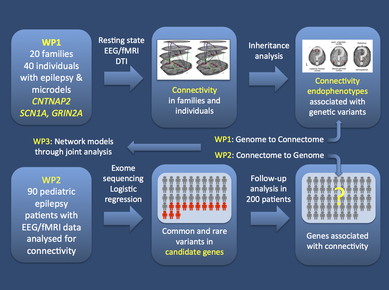 Basically, the aim of our proposal was to push the boundaries by using connectivity measures as quantitative endophenotypes. I personally believe that this is one of the ways to go in epilepsy genetics, given the phenotypic range we see with some of the variants we investigate.