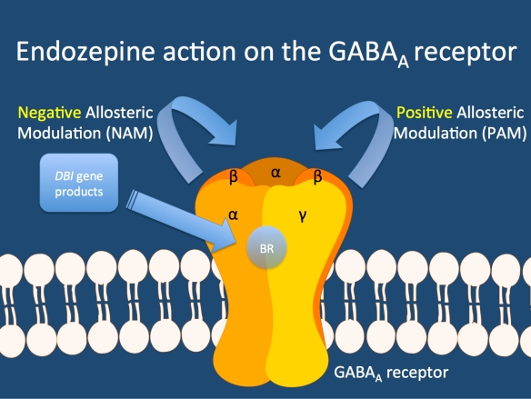 Model of the GABA-A receptor adapted from the review by Harward and McNamara. The GABA-A receptor consists of five GABA receptor subunits. The benzodiazepine receptor is independent of the binding site for GABA (allosteric). DBI gene products are likely to have endozepine action, i.e. they bind to the benzodiazepine receptor and either enhance (PAM) or reduce (NAM) the action of GABA.