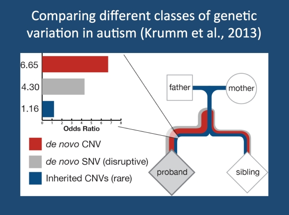 Modified figure of the paper by Krumm and collaborators. A comparison of the effect size of different genetic risk factors in autism, comparing affected and unaffected siblings. In summary, in affected siblings, there is an enrichment of de novo mutations, large copy number variants, and inherited small copy number variants. When the risk between these different classes of genetic variants is compared, small inherited CNVs represent a minor, but independent, genetic risk factor, a novel type of genetic morbidity in neurodevelopmental disease. (non-copyrighted version of figure provided by author, SNV – single nucleotide variations, CNV copy number variations)