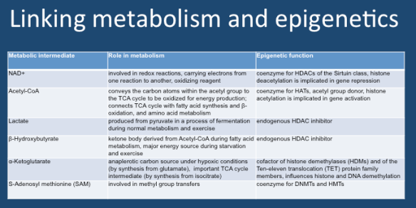 Metabolism and epigenetics