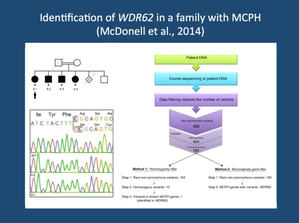 Analysis strategy in the publication by McDonell and collaborators. The researchers looked for the cause of the primary autosomal recessive microcephaly (MCPH) in a family with four affected siblings (upper left corner). They performed exome sequencing in one family member and used stringent filtering to zoom in on the culprit mutation, a homozygous single base pair insertion in WDR62 (right panel). This mutation was confirmed through Sanger sequencing (lower left panel). The figure was adapted from the open access publication by the authors under a creative commons licence. Source: http://www.biomedcentral.com/1471-2377/14/22)