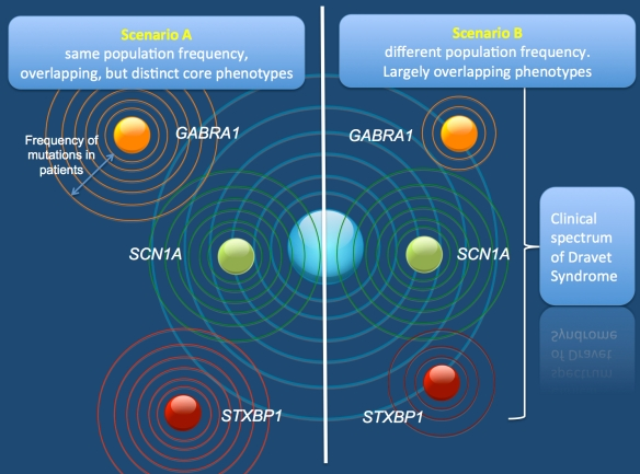 "The two scenarios on how mutations in SCN1A, GABRA1, and STXBP1 may result in Dravet Syndrome. According to Scenario A, all mutations have an equal probability of occurring, but the phenotypic range is different. The ""core phenotype"" would describe the most characteristic phenotype with these mutations, but may be different for all three genes. According to Scenario B, the phenotypic range is similar, but the mutations have different probabilities of occurring. Scenario B would stipulate that all phenotypic differences suggested so far for these genes might be the results of recruitment bias. According to the recent literature, Scenario A is favored over Scenario B."
